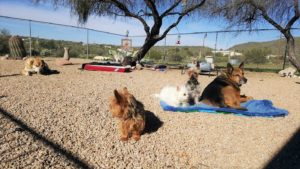 azmidday-sanctuary-play-yard-dogs
